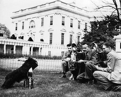 President Franklin D. Roosevelt's dog Fala with photographers FDR 8x10 Photo