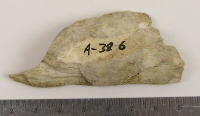 Pre-historic BONE FRAGMENT, Fort Saskatchewan, Alberta (A-402) Lot 4818