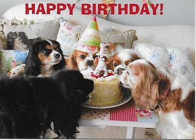 Happy Birthday Party Cavalier King Charles Spaniel small blank Note Card