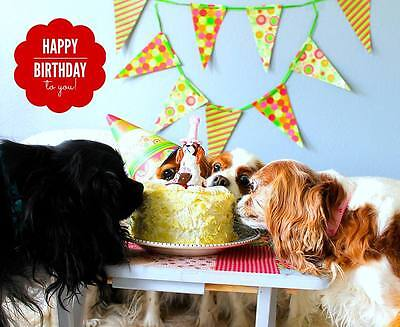 Happy Birthday to you! Cavalier King Charles Spaniel small ote Card