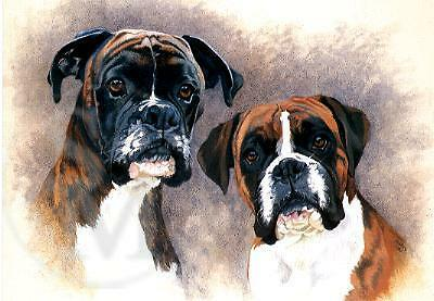 Boxer Notecards Note Cards Chums by Margaret Hawkes  Pack of 5 LAST ONES!