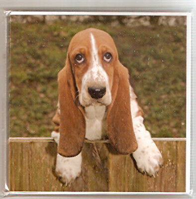 Basset Hound Notecards Note Cards from UK  Pack of 6 LAST PACK