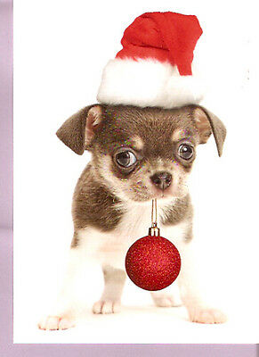 Chihuahua Santa with Gift Ornament Christmas Cards Box of 12