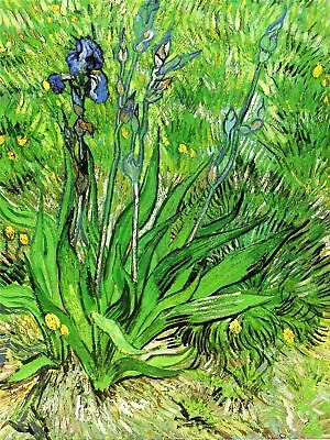 Vincent Van Gogh Iris 1889 Old Master Art Painting Canvas Art Print