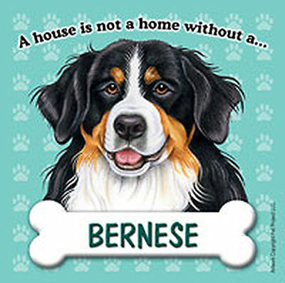 Bernese Mt. Magnet - House Is Not A Home