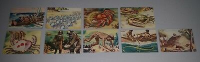 Cereal cards x 9 Marvels of the Great Barrier Reef 1940's Weet Bix Sanitarium