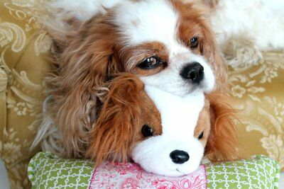 Friday & Her Buddy Blenheim Cavalier King Charles Spaniel blank note card