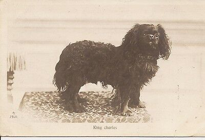 1901 Cavalier King Charles Spaniel blank note card