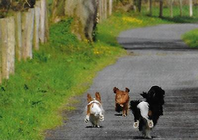 One Heading Home.  Cavalier King Charles Spaniels small blank note card
