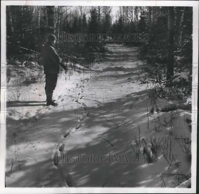 1955 Press Photo Rabbit hunter looks at rabbit tracks in Forest county Wisconsin