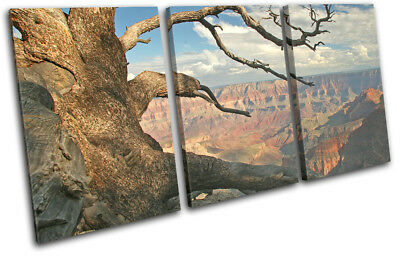 Grand Canyon Tree  Landscapes TREBLE CANVAS WALL ART Picture Print