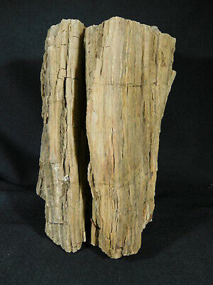 Perfect BARK! A HUGE! 225 Million Year Old Petrified Wood Fossil Utah 3755gr e