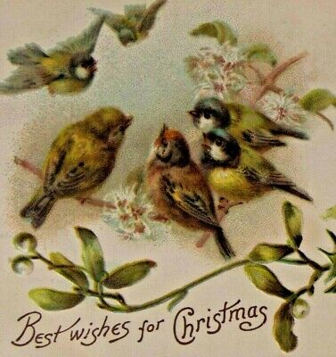 c. 1909 Embossed Colorful Christmas Postcard - Birds Singing, Holly