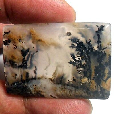 62ct AAA Mesmerising Brown Black DENDRITIC FERN Forest PICTURE AGATE ~Stunning~