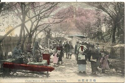 JAPAN Cherry Blossums Yokohama 1909 postcard