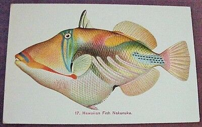 1910's Colorful Hawaiian Fish Nakunuku TH Hawaii Steiner PMC #17