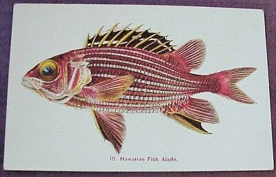 1910's Colorful Hawaiian Fish Alaihi TH Hawaii Steiner PMC #19