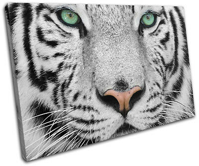 Siberian Tiger Green Eyes Animals SINGLE CANVAS WALL ART Picture Print