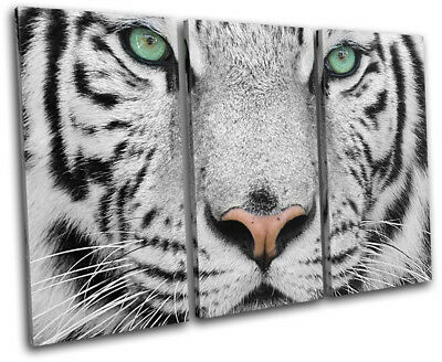 Siberian Tiger Green Eyes Animals TREBLE CANVAS WALL ART Picture Print