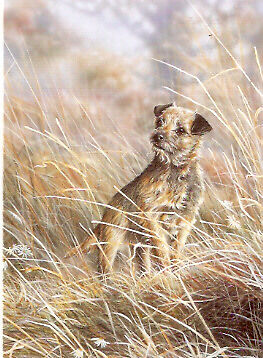 Border Terrier Notecards Note Cards: Where? by Paul Doyle - Pack of 5 b