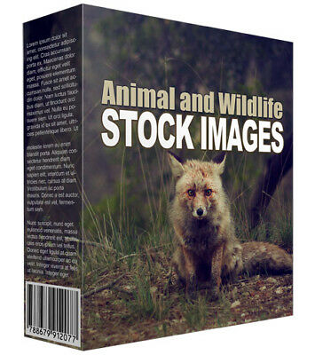 Animal and wildlife Stock Images. 92 stock images for you to use. Royalty free