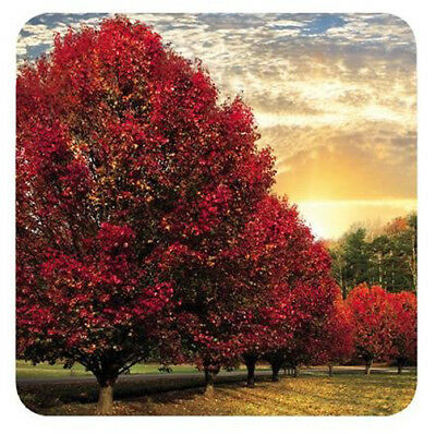 Pimpernel Set of 6 Crimson Trees Coasters Drink Mats Red Kitchen Dining Bar New