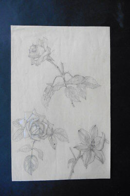 French School Ca. 1900 - Fine Study Of Flowers - Pencil-Watercolor