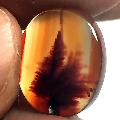 6ct AAA Mesmerising Orange RED DENDRITIC FERN Forest PICTURE AGATE ~Stunning~