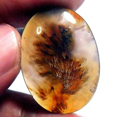 39ct Top Grade SAGENITIC  Picture AGATE~ Natural Golden Brown Needle Display~