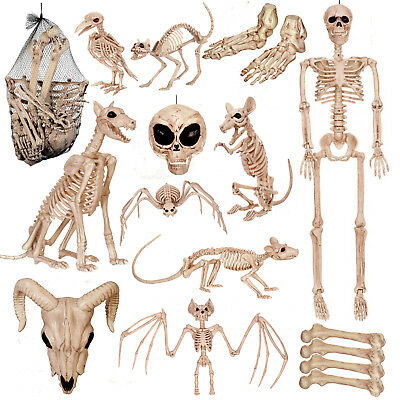 Halloween Human Animal Skeleton Crazy Bones Posable Party Props Decorations