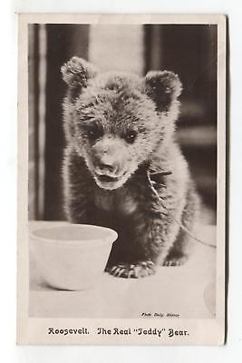 Roosevelt, the real teddy bear - cub - old real photo postcard by Gordon Smith