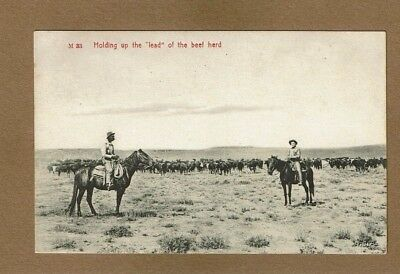 """Cowboys on horses Holding up the """"LEAD"""" of the beef herd, used 1908 Chas Morris"""