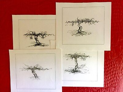 Pen and Ink Drawings (11) of Grape Vines