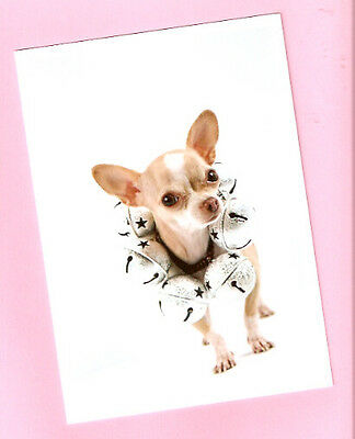 Chihuahua with Jingle Bells Christmas Cards Box of 10
