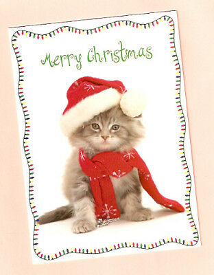 Cat Kitten Christmas Cards - Box of 15