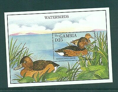 Gambia 1995 Ferruginous Ducks Water Birds Minisheet MNH SG 1984a