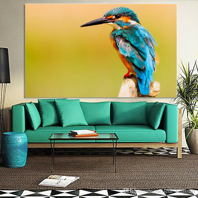 Colorful  KINGFISHER BIRDS  ARTS Canvas collection Home decor wall print art