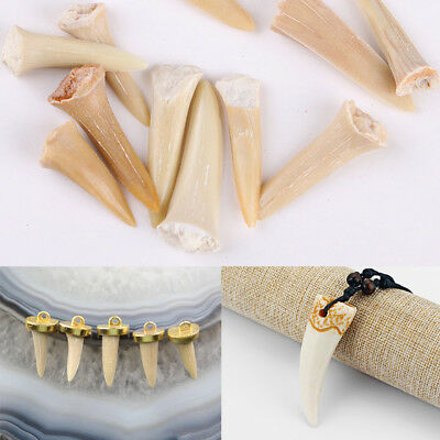 Animal Shark Tooth Fossil Natural Pendant Nacklace Jewelry Making DIY Lucky Gift