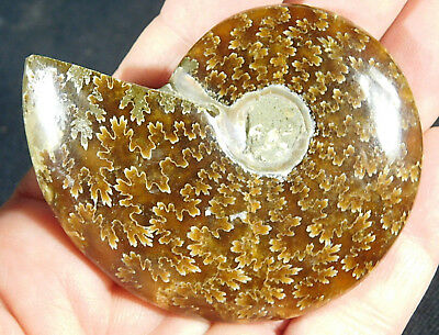 A NICE! 100% Natural Polished Cretaceous Era Sutured Ammonite Fossil 101gr