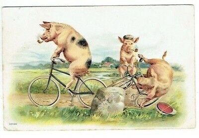 Old Bicycle Postcard Cycling Pigs Smoking Pipes Vintage Chrom-Litho Used 1904