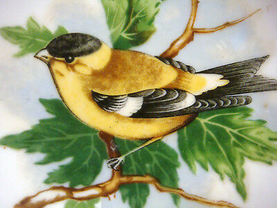 """Vintage 5"""" Hand Painted GOLD FINCH Plate by SONSCO Japan"""