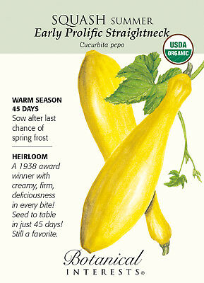 ORGANIC Early Prolific Straightneck Squash seed 20ct grown in USA 2018