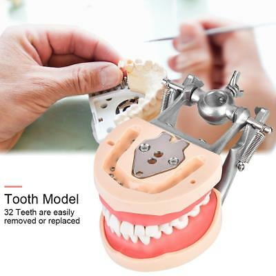 New Dental Typodont Model 32 Teeth Removable Tooth Model Practice Standard gbd