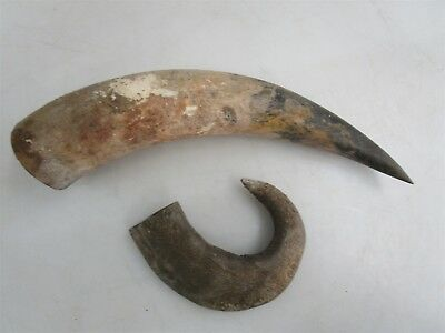 Buffalo & Ram Horn Lot of 2 Taxidermy Curio Oddity Horns Strange Obscure Vintage