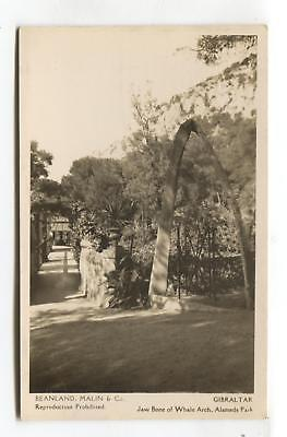 Gibraltar - Jaw Bone of Whale Arch, Alameda Park - old real photo postcard