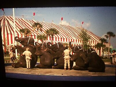 10 Assorted 35 MM Slides Circus Elephants 1970s