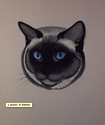 """FRAMED VINTAGE COLORED LITHOGRAPH OF CAT """"BABETTE"""" 1937 by CLARE TURLAY NEWBERRY"""