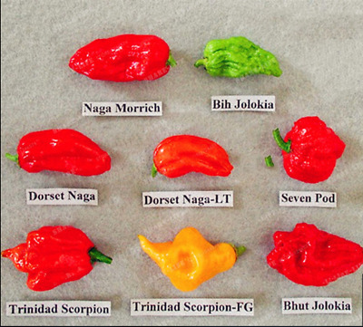 100 Pcs WORLDS HOTTEST Pepper Seeds,8 Worlds Hottest Pepper,RARE Chili Pepper