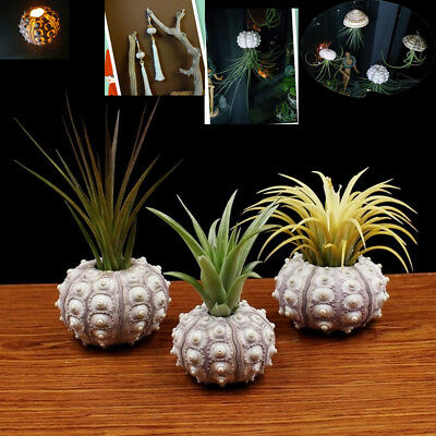 Sea Urchin Air Plants Desktop Tillandsia Holder Miniature Gardening Home Decor