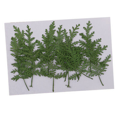 12pcs Real Dried Leaves Wormwood Embellishment for DIY Phone Case Decoration